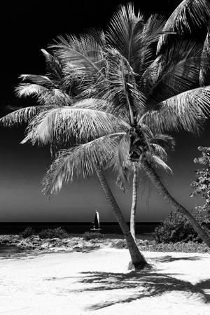 Palms on a White Sand Beach in Key West - Florida