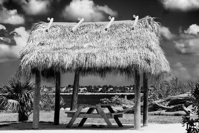 Windbreak with Tropical Thatched Roof - Florida