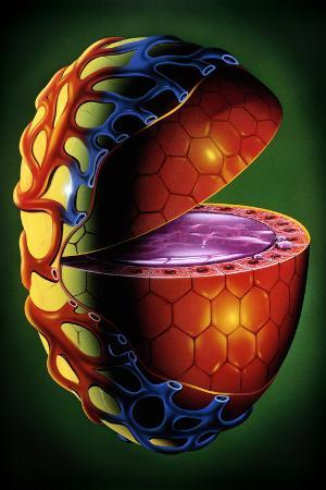 Illustration of Single Thyroid Follicle