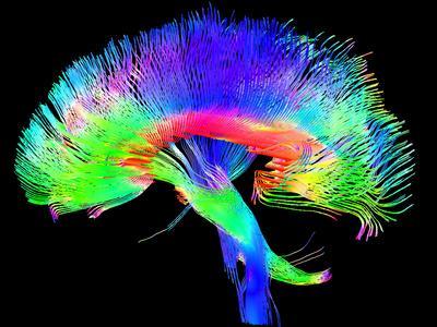 Brain Pathways