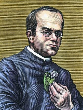 Gregor Mendel, Austrian Botanist