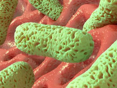 Rod-shaped Bacteria, Artwork