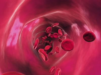 Red Blood Cells In Blood Vessel, Artwork