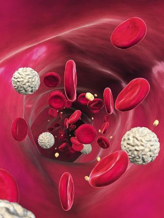 Blood Cells In Blood Vessel, Artwork