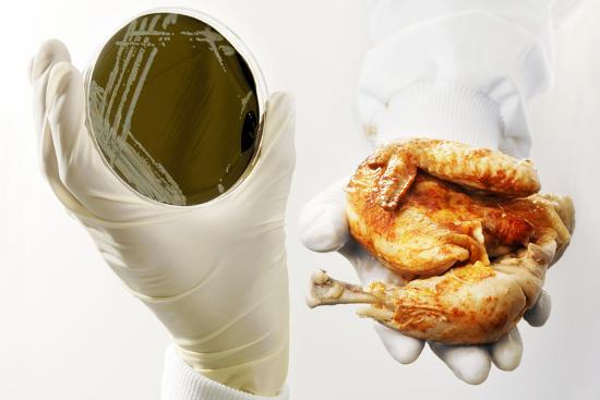 Campylobacter Food Poisoning Photographic Print By Tim Vernon At