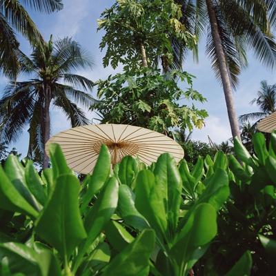 Tropical Plants and Traditional Parasols