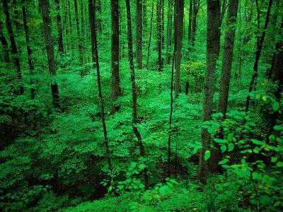 Forest in Great Smoky Mountains