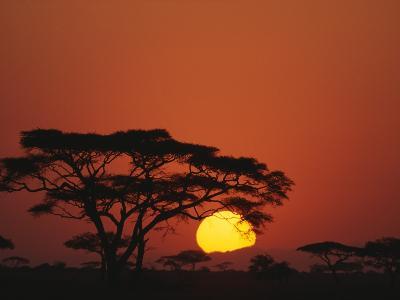 Sunrise and Acacia Trees