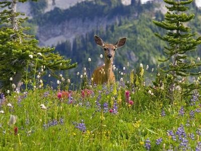 Deer in Wildflowers