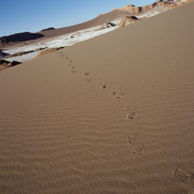 View of footprints leading over a sand dune