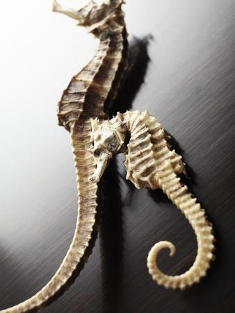 Dried Seahorses