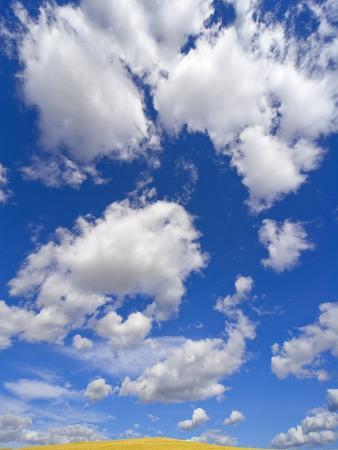 Beautiful Cumulus Clouds and Golden Prairie