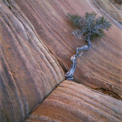 Tree Growing in Rock Cliff