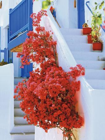 Flowers Blooming on Stairway
