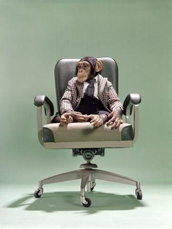 1970s Businessman Chimpanzee Sitting In Office Chair