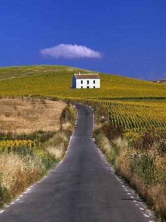 Farmhouse by Country Road