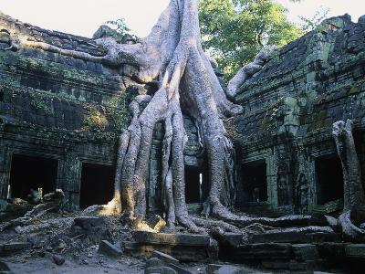 Tree Growing Through Ta Prohm Temple