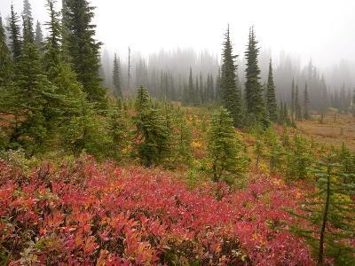 Fall Colors and Evergreen Trees in the Fog