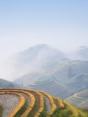 Rice Growing on Terraced Fields on Mountain Slopes