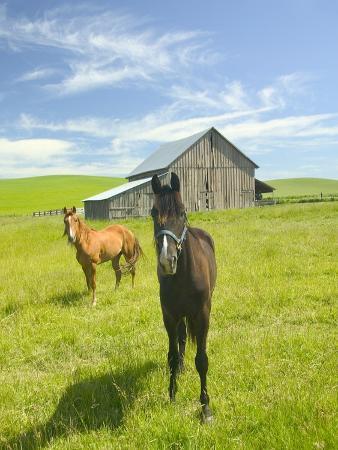 Horses and Barn in Prairie