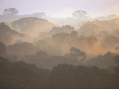 Morning Fog and Tropical Rainforest Canopy in Ecuador