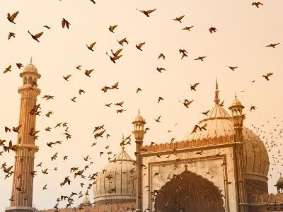 Flock of Birds Flying Around Jama Masjid Mosque