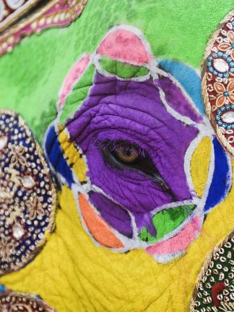 Close-up of a Painted Elephant, Elephant Festival, Jaipur, Rajasthan, India
