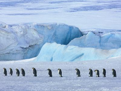 Emperor penguin group with iceberg