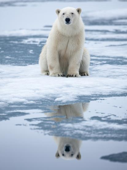 Polar bear on ice photographic print by paul souders at - Photo ours blanc sur la banquise ...