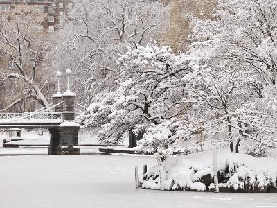 Snow covered trees with a footbridge in a public park, Boston Public Garden, Boston, Massachusetts,