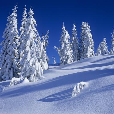 Fresh Snow on Mount Elphinstone, British Columbia, Canada.