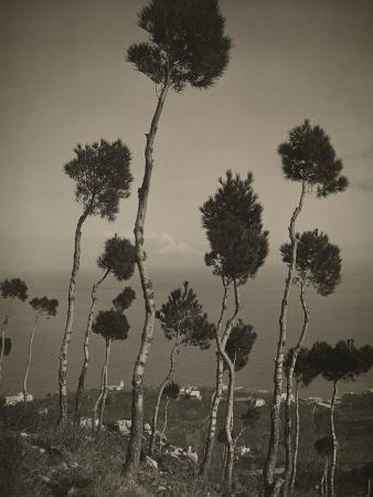 A Garden of Stone Pines on a Caprian Hill