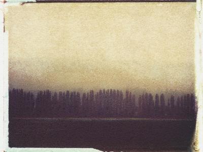 Skagit Valley Poplars No.2