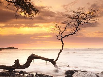Tree on Anaehoomalu Beach