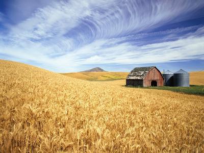 Wheat Field Surrounding Barn