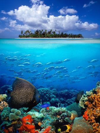 Underwater Scene in the Tropics
