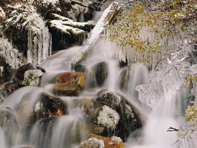 Trees Covered in Ice by Cascade