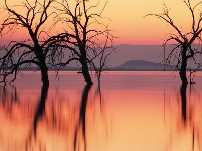Silhouetted Trees in Salton Sea