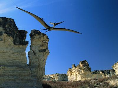 Pteranodon Longiceps in Flight