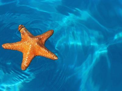 Starfish Floating on the Surface of the Ocean