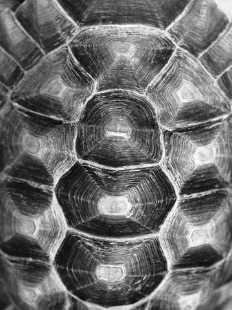 Pattern on Turtle's Shell
