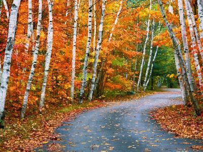 Autumn Trees Lining Country Road