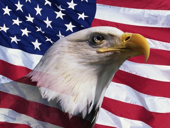 Bald Eagle and American Flag Photographic Print by Joseph Sohm at AllPosters.com