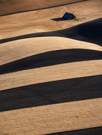 Wheat Fields on the Palouse Hills