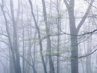 Dogwood Trees in Great Smoky Mountains National Park