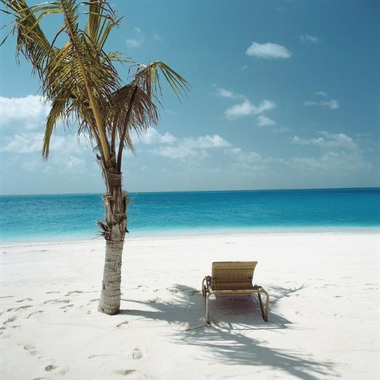 Palm Tree And Beach Chair Photographic Print At Allposters Com