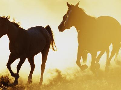 Horses Running at Sunset