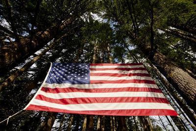 American Flag in Forest, Washington