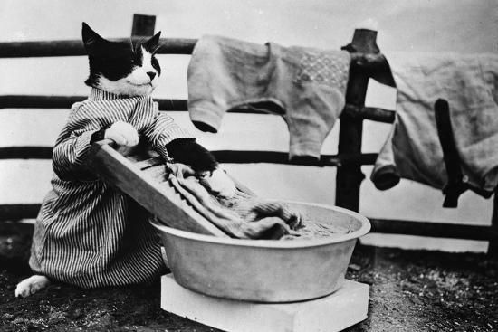 Dressed Up Cat Washing Clothes In Wash Tub Photographic