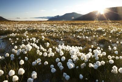 Arctic Landscape, Svalbard